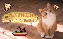 10 ทรายแมว ยี่ห้อไหนดี ไม่มีสารเคมี ดับกลิ่นฉี่ดีเยี่ยม 2021