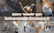 """รวมภาพ """"แมวจรจัด"""" สุดฮา โดยช่างภาพชาวญี่ปุ่น ที่ทาสแมวควรดู !!!"""